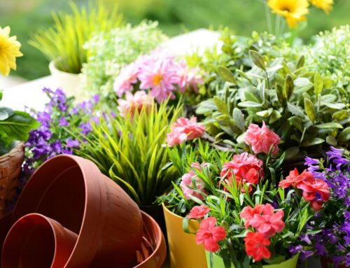 Frugal Curb Appeal Tips